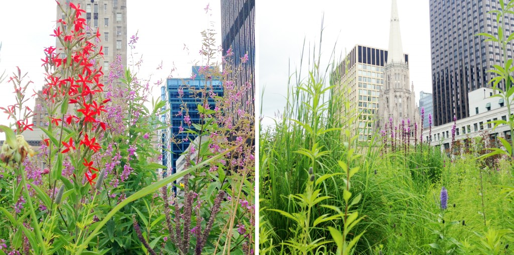 Royal Catchfly and other prairie plants adorn the skyline