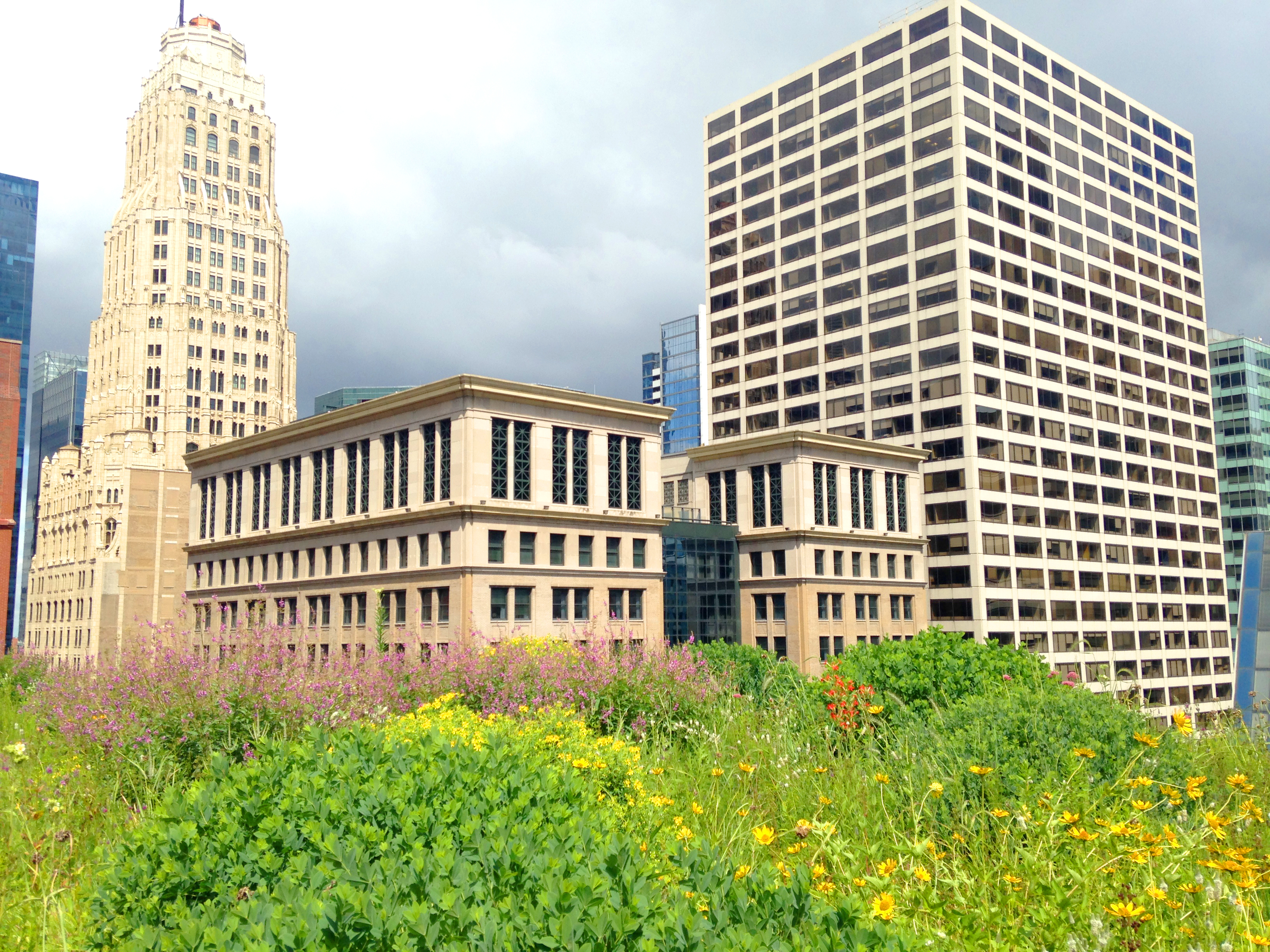 The Splendid View From The Chicago City Hall Green Roof