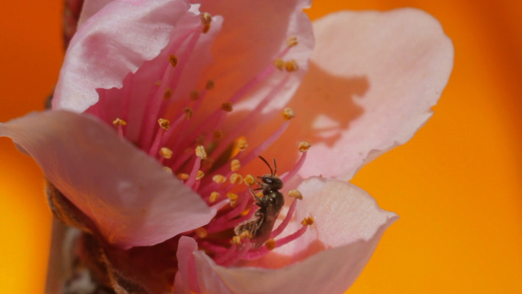Sarah Rara, still from The Pollinators, 2014. Video with sound. 65 minutes. Sound by Luke Fischbeck. Courtesy of the artist.